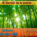 Planta mágica: Bambú de la suerte